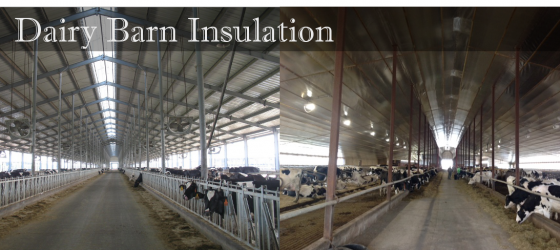 Dairy Barn  Insulation